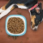 Why a dog owner should consider using an elevated dog food bowl?