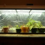 Frequently Asked Questions about Terrarium Workshop Singapore – What You Need to Know